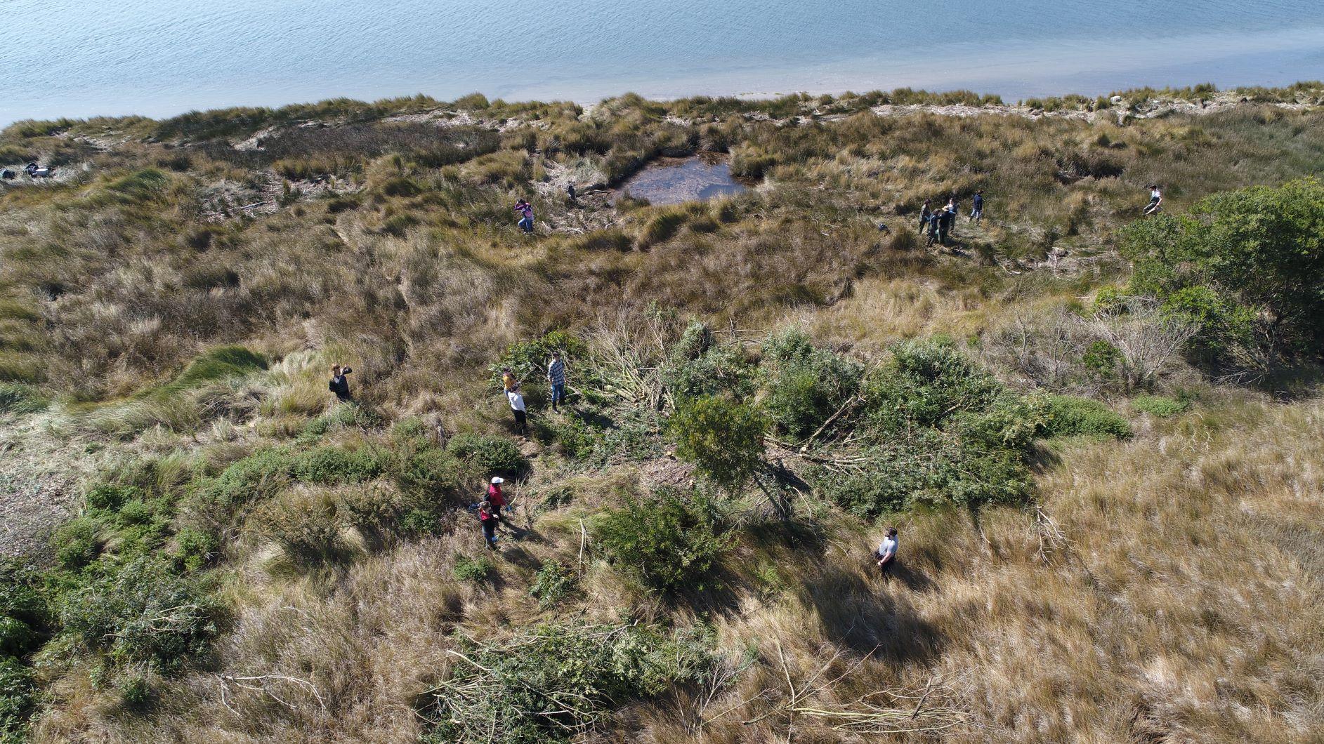 Viana do Castelo erradica espécies invasoras nas ínsuas do rio Lima