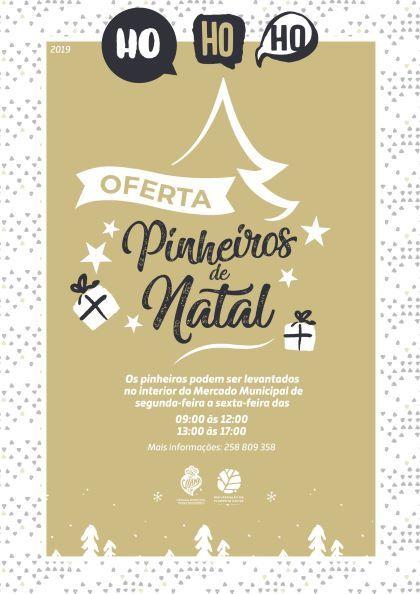 Pinheirinhos de Natal já disponíveis gratuitamente no Mercado Municipal