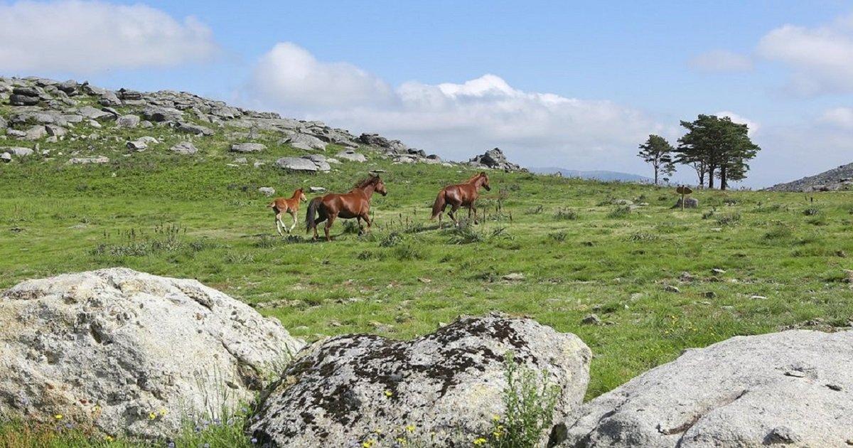 Serra d'Arga deverá ser Área de Paisagem Protegida no início de 2021