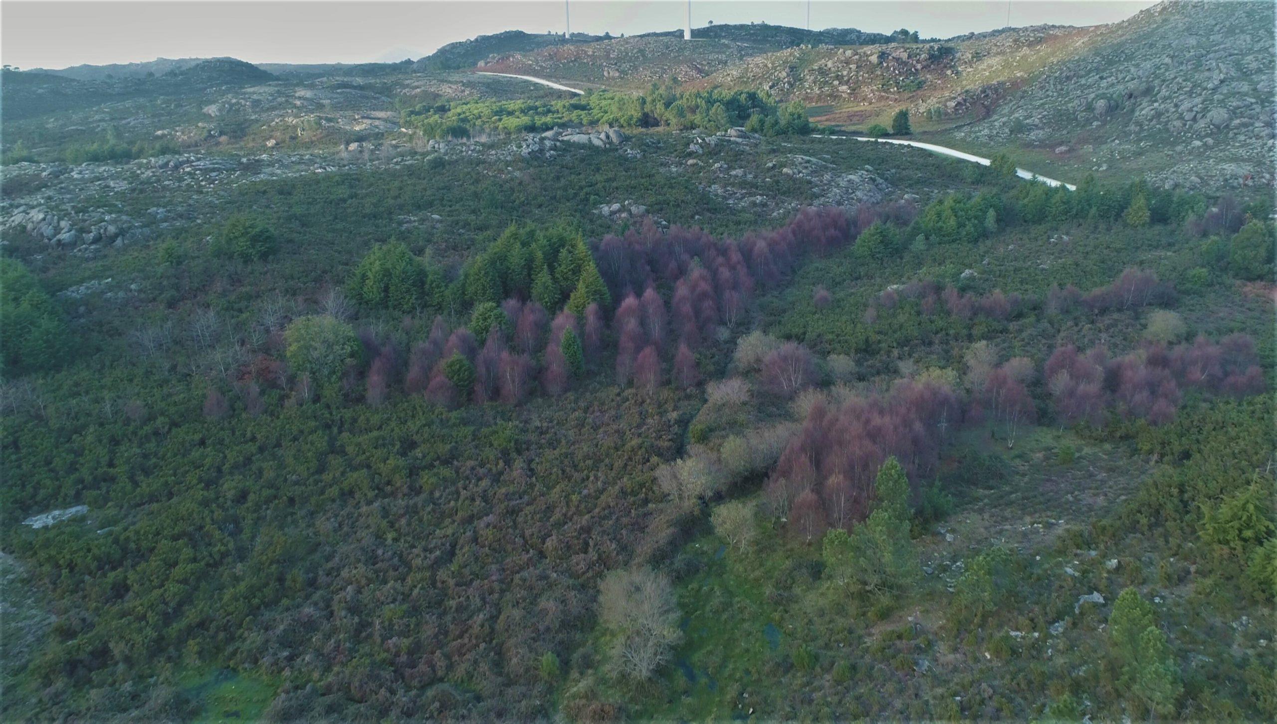 """Viana do Castelo cria banco com baldios para """"anular"""" emissões de carbono de empresas"""